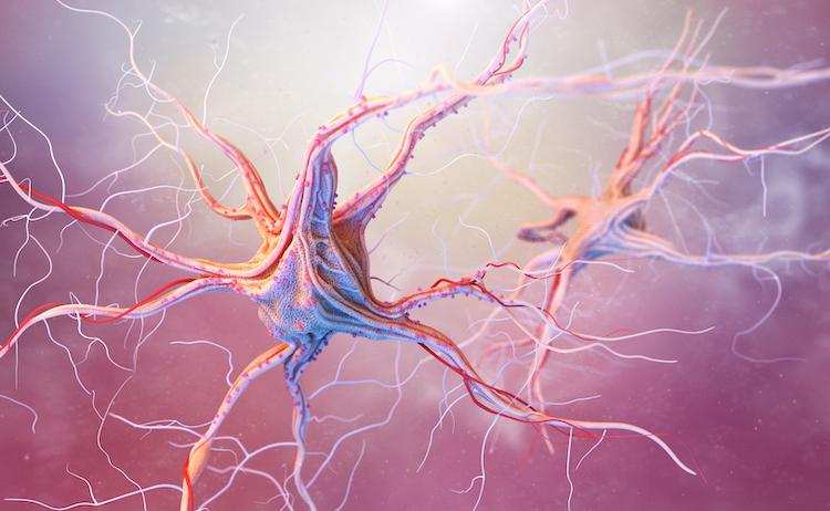 grow new neurons