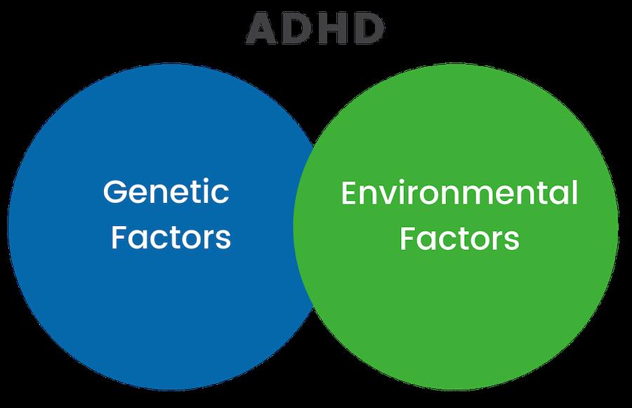 attention boosting program ADHD chart